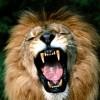 Le Vieux Lion rugit